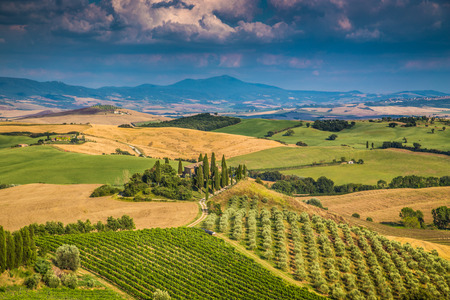 val d'orcia: Scenic Tuscany landscape with rolling hills and valleys in golden evening light, Val d Orcia, Tuscany, Italy