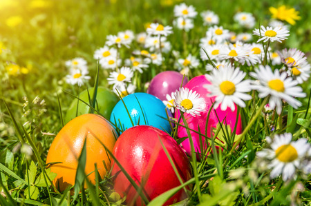 Colorful Easter eggs lying in the grass between daisies and dandelions in the sunshine photo