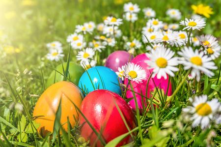 huevos de pascua: Hermosa vista de coloridos huevos de pascua que mienten en la hierba entre las margaritas y dientes de le�n bajo el sol Foto de archivo