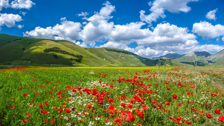 italian landscape: Beautiful summer landscape at Piano Grande Great Plain mountain plateau in the Apennine Mountains, Castelluccio di Norcia, Umbria, Italy