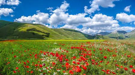 paisaje rural: Hermoso paisaje de verano en Piano Grande Gran Llanura meseta de la montaña en las montañas de los Apeninos, Castelluccio di Norcia, Umbría, Italia