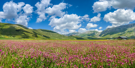 on the hill: Beautiful summer landscape at Piano Grande Great Plain mountain plateau in the Apennine Mountains, Castelluccio di Norcia, Umbria, Italy