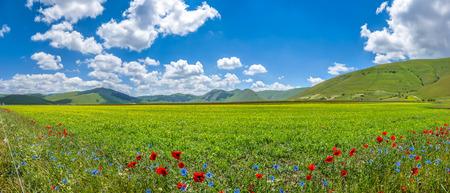 campo de flores: Hermoso paisaje de verano en Piano Grande Gran Llanura meseta de la montaña en las montañas de los Apeninos, Castelluccio di Norcia, Umbría, Italia
