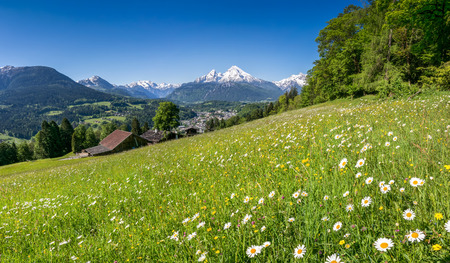 spring time: Panoramic view of beautiful landscape in the Bavarian Alps with beautiful flowers and famous Watzmann mountain in the background in springtime, Nationalpark Berchtesgadener Land, Bavaria, Germany