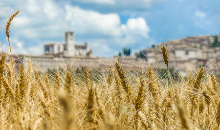 Beautiful view of golden harvest field and the blurred town of Assisi in the background, Umbria, Italy Stock Photo