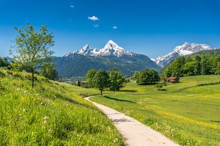 Idyllische Sommerlandschaft in den Alpen mit frischen grünen Almen und schneebedeckten Berggipfeln im Hintergrund, Nationalpark Berchtesgadener Land, Bayern, Deutschland