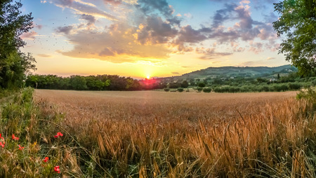 blue romance: Beautiful view of  harvest field near the ancient town of Assisi with dramatic cloudscape in golden evening light, Umbria, Italy