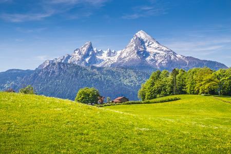 Paisaje idílico en los Alpes con prados verdes y frescas flores que florecen y cimas de las montañas cubiertas de nieve en el fondo, Nationalpark Berchtesgaden, Baviera, Alemania Foto de archivo