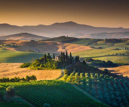 italy landscape: Scenic Tuscany landscape with rolling hills and valleys in golden morning light, Val dOrcia, Italy