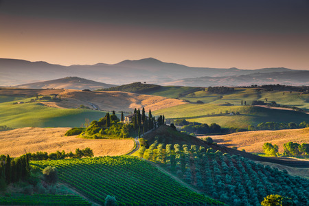 wine road: Scenic Tuscany landscape with rolling hills and valleys in golden morning light, Val dOrcia, Italy