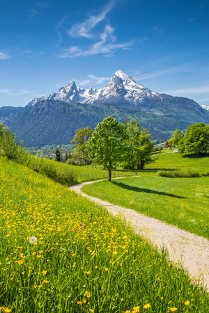 views of the mountains: Idyllic summer landscape in the Alps with fresh green mountain pastures and snow-capped mountain tops in the background, Nationalpark Berchtesgadener Land, Bavaria, Germany