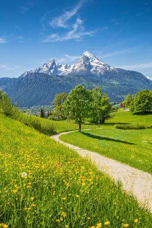 Idyllische zomer landschap in de Alpen met verse groene alpenweiden en de met sneeuw bedekte bergtoppen op de achtergrond, Nationalpark Berchtesgaden, Beieren, Duitsland