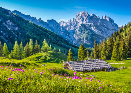 Idyllic landscape in the Alps with traditional mountain chalet and fresh green mountain pastures with blooming flowers at sunset, Nationalpark Berchtesgadener Land, Bavaria, Germany Stock fotó