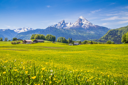 spring season: Idyllic landscape in the Alps with fresh green meadows and blooming flowers and snow-capped mountain tops in the background Stock Photo