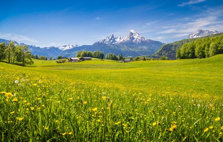 landschaft: Idyllische Landschaft in den Alpen mit frischen grünen Wiesen und blühenden Blumen und schneebedeckte Berggipfel im Hintergrund