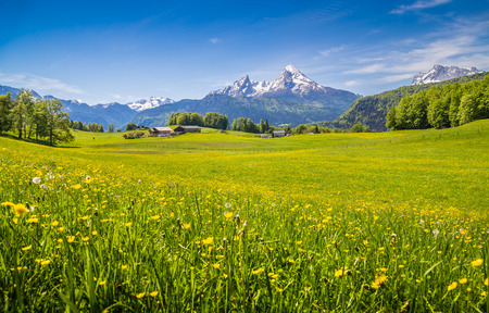 Idyllic landscape in the Alps with fresh green meadows and blooming flowers and snow-capped mountain tops in the background Stockfoto