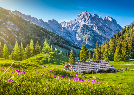 Idyllic landscape in the Alps with traditional mountain chalet and fresh green mountain pastures with blooming flowers at sunset, Nationalpark Berchtesgadener Land, Bavaria, Germany