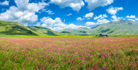 italy landscape: Beautiful summer landscape at Piano Grande Great Plain mountain plateau in the Apennine Mountains, Castelluccio di Norcia, Umbria, Italy