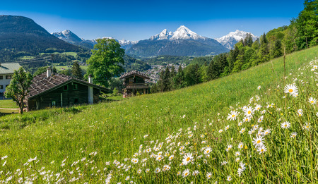 spring landscape: Panoramic view of beautiful landscape in the Bavarian Alps with beautiful flowers and famous Watzmann mountain in the background in springtime, Nationalpark Berchtesgadener Land, Bavaria, Germany
