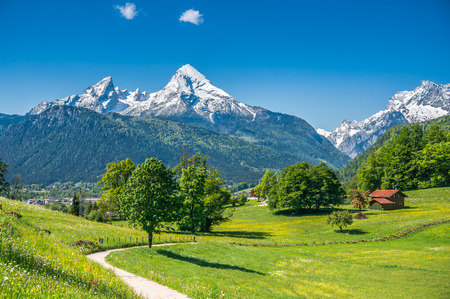Idyllic summer landscape in the Alps with fresh green mountain pastures and snow-capped mountain tops in the background, Nationalpark Berchtesgadener Land, Bavaria, Germany