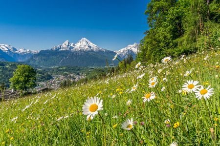 Panorama-Blick auf schöne Landschaft in den bayerischen Alpen mit schönen Blumen und berühmten Watzmann im Hintergrund im Frühling, Nationalpark Berchtesgadener Land, Bayern, Deutschland