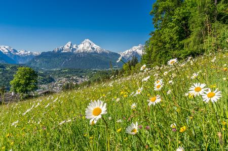 Panoramablick der schönen Landschaft in den bayerischen Alpen mit schönen Blumen und berühmtem Watzmann-Berg im Hintergrund im Frühjahr, Nationalpark Berchtesgadener Land, Bayern, Deutschland