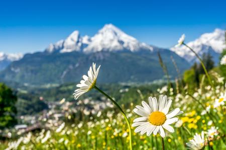 spring: Vista artística del paisaje en los Alpes bávaros con hermosas flores y borrosa de montaña Watzmann en el fondo en la primavera, Parque Nacional de Berchtesgaden, Baviera, Alemania