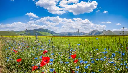 spring: Hermoso paisaje de verano en Piano Grande Gran Llanura meseta de la montaña en las montañas de los Apeninos, Castelluccio di Norcia, Umbría, Italia