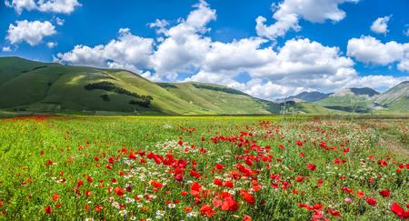castelluccio: Beautiful summer landscape at Piano Grande Great Plain mountain plateau in the Apennine Mountains, Castelluccio di Norcia, Umbria, Italy
