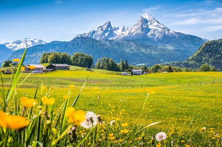 Idylliczny krajobraz w Alpach ze świeżych zielonych łąk i kwitnących kwiatów, typowych zabudowań gospodarczych i ośnieżone szczyty górskie w tle, Nationalpark Berchtesgadener, Bawaria, Niemcy