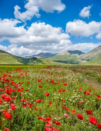 Mooie zomer landschap in Piano Grande Great Plain berg plateau in de Apennijnen, Castelluccio di Norcia, Umbrië, Italië