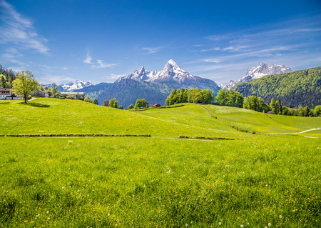 Idyllic landscape in the Alps with fresh green meadows and blooming flowers and snowcapped mountain tops in the background, Nationalpark Berchtesgadener Land, Bavaria, Germany Stock Photo