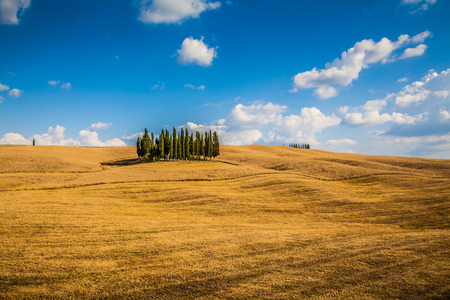 val dorcia: Panoramic view of scenic Tuscany landscape with golden harvest fields and famous group of cypress trees on top of a hill on a sunny day with blue sky and clouds in summer, Val dOrcia valley, Italy
