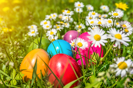 easter eggs: Beautiful view of colorful Easter eggs lying in the grass between daisies and dandelions in the sunshine