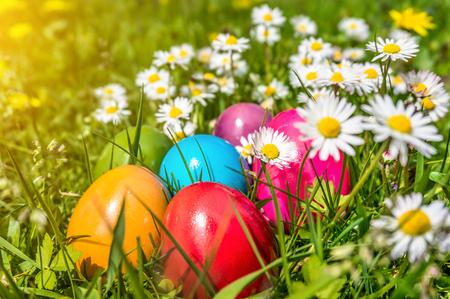 huevos de pascua: Hermosa vista de coloridos huevos de pascua que mienten en la hierba entre las margaritas y dientes de león bajo el sol Foto de archivo