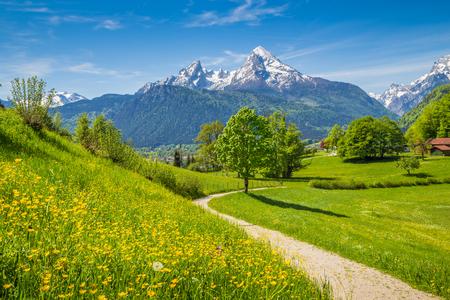 Idilliaco paesaggio estivo nelle Alpi con fresche verdi alpeggi e cime innevate sullo sfondo, Nazionale Berchtesgadener Land, Baviera, Germania