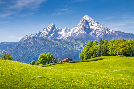 green meadow: Idyllic landscape in the Alps with fresh green meadows and blooming flowers and snowcapped mountain tops in the background, Nationalpark Berchtesgadener Land, Bavaria, Germany Stock Photo