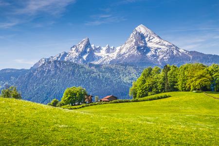 Idyllische Landschaft in den Alpen mit frischen grünen Wiesen und blühenden Blumen und schneebedeckten Bergspitzen im Hintergrund, Nationalpark Berchtesgadener Land, Bayern, Deutschland