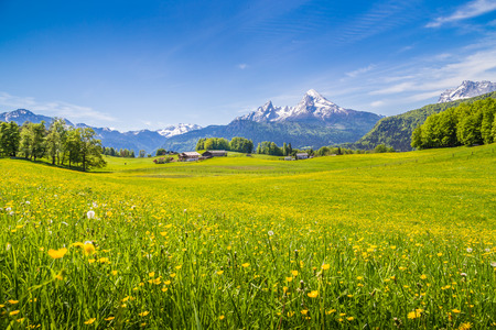 blue sky and fields: Idyllic landscape in the Alps with fresh green meadows and blooming flowers and snow-capped mountain tops in the background Stock Photo