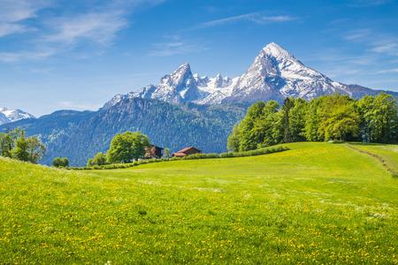 Paisaje idílico en los Alpes con prados verdes y frescas flores que florecen y cimas de las montañas cubiertas de nieve en el fondo, Nationalpark Berchtesgaden, Baviera, Alemania