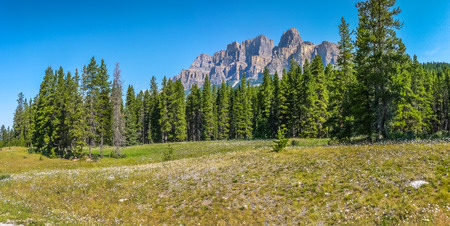 Panoramic view of beautiful landscape with field of flowers and Rocky Mountains in the background in Jasper National Park, Alberta, Canada Stock Photo