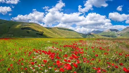 アペニン山脈、カステッルッチョ ・ ディ ・ ノルチャ、ウンブリア州、イタリアのピアノ グランデ大平原山高原で美しい夏の風景