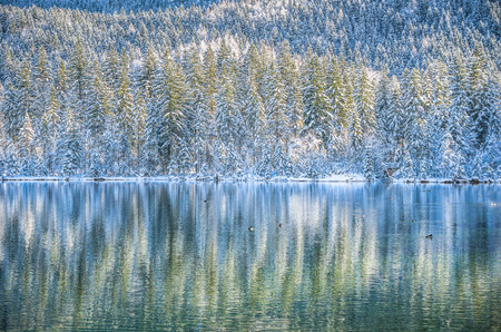 unspoilt: Beautiful view of unspoilt winter wonderland scene with ducks swimming in cystal clear mountain lake