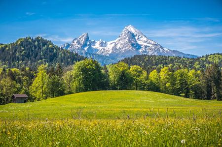 Idylliczny krajobraz w Alpach ze świeżych zielonych łąk