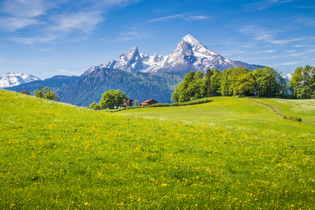 Idyllic landscape in the Alps with fresh green meadows and blooming flowers and snowcapped mountain tops in the background