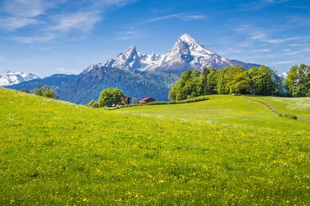 Paysage idyllique dans les Alpes avec des prairies vertes fraîches et fleurs épanouies et sommets des montagnes aux sommets enneigés en arrière-plan Banque d'images