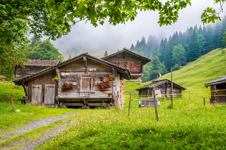 신선한 녹색 산 목초지, 나무와 여름, Berner Oberland, 스위스에서 흐린 날에 신비한 안개와 함께 알프스에서 전통적인 오래 된 목조 산 샬레의 경치를 볼
