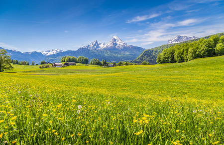 Idyllische landschap in de Alpen met verse groene weiden en bloeiende bloemen en besneeuwde bergtoppen op de achtergrond Stockfoto