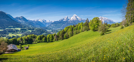 german swiss: Idyllic landscape in the Alps with fresh green meadows, blooming flowers, farmhouses and snowcapped mountain tops in the background, Nationalpark Berchtesgadener Land, Bavaria, Germany