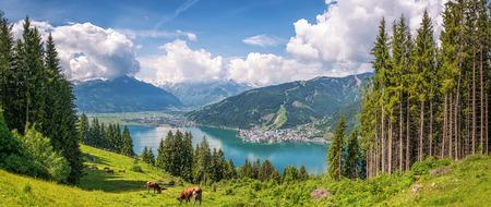 Prachtig panoramisch uitzicht koe grazen in verse groene weilanden in de Alpen met beroemde stad van Zell am See en idyllische Zeller See op een zonnige dag in het voorjaar in Salzburg, Salzburg, Oostenrijk Stockfoto